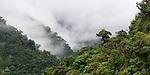 Mist over mid-altitude montane rainforest. Manu Biosphere Reserve, Amazonia, Peru.