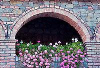 Hanging begonias in arch windows. Castello di Amorosa. Napa Valley, California. Property relased