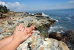 Honeymoon in Acadia National Park, Bar Harbor, ME