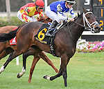 OLDSMAR, FLORIDA - MARCH 12:  Tepin #6, ridden by jockey Julien R. Leparoux, down the stretch, sets a new track record and wins the Hillsborough Stakes at Tampa Bay Downs on March 12, 2016 in Oldsmar, Florida (photo by Doug DeFelice/Eclipse Sportswire/Getty Images)