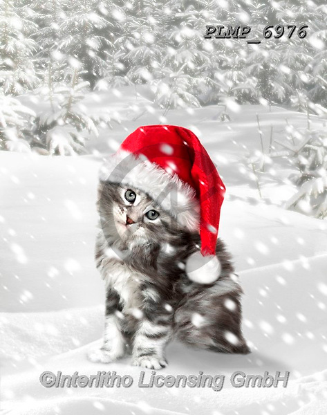 Marek, CHRISTMAS ANIMALS, WEIHNACHTEN TIERE, NAVIDAD ANIMALES, photos+++++,PLMP6976,#xa# ,kittens,cats