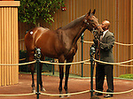 13 September 2010.  Hip #115 First Samurai - Adventure filly sold for $450,000 at the Keeneland September Yearling Sale.  Consigned by Runnymede farm.