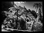 Taranaki Landscapes