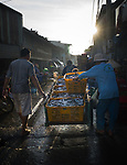 """Pictured: Traders lay out their stools in a fishing village of Long Hai commune in Vung Tau province, south of Vietnam, with the market opening at midnight and trading into the early hours of the morning each day.<br />  <br /> It is the largest wholesale fishing market in the region and market traders can be seen sorting their fish into their different types before putting them into different coloured boxes for sale.<br /> <br /> Pham Huy Trung, 40, an engineer, in Ho Chi Minh city, Vietnam who visited the market said,""""It is a wholesale market and purchase will be taken to smaller markets for consumers to buy them to eat.""""<br /> <br /> Please byline: Pham Huy Trung/Solent News<br /> <br /> © Pham Huy Trung/Solent News & Photo Agency<br /> UK +44 (0) 2380 458800"""