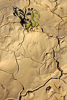 Green plant growing in cracked dry soil.