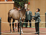 September 08, 2014:Hip #154 Tapit - Ponche De Leona filly consigned by Hill n'Dale Sales sold for $775,000 to Fox Hill Farm at the Keeneland September Yearling Sale.  Candice Chavez/ESW/CSM