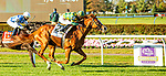 """OCT 03, 2020 : Gufo with Junior Alverado aboard, survives and inquiry to win the """"Win & You're In"""" Belmont Derby Invitational Stakes, for 3-year old, on the inner turf, at Belmont Park, Elmont, NY.  Sue Kawczynski/Eclipse Sportswire/CSM"""