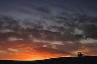 Single Tree Barrhead at sunrise, East Renfrewshire