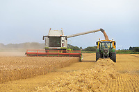 12-8-2021 Harvesting Winter wheat in Deeping Fen <br /> ©Tim Scrivener Photographer 07850 303986<br />      ....Covering Agriculture In The UK....
