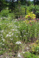 Native plantings of Achillea yarrow, Monarda, Ilex, attracting butterflies and wildlife to the garden