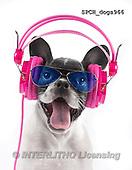 Xavier, ANIMALS, REALISTISCHE TIERE, ANIMALES REALISTICOS, fondless, photos+++++,SPCHDOGS966,#A#