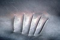 Caribbean reef shark, Carcharhinus perezii, gill slits, Freeport, Grand Bahama, Bahamas, Caribbean Sea, Atlantic Ocean