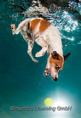 REALISTIC ANIMALS, REALISTISCHE TIERE, ANIMALES REALISTICOS, dogs, paintings+++++SethC_Stella_320B2732revwork,USLGSC66,#A#, EVERYDAY ,underwater dogs,photos,fotos ,Seth