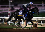 OCT 25:Breeders' Cup Distaff entrant Midnight Bisou, trained by Steven M. Asmussen, gallops at Santa Anita Park in Arcadia, California on Oct 25, 2019. Evers/Eclipse Sportswire/Breeders' Cup