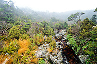 Saxon River on Heaphy Track - Kahurangi National Park, Nelson Region, New Zealand