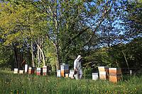 A beekeeper in his apiary in Salvetat sur Agout.///Un apiculteur sur son rucher de la Salvetat sur agout