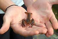 Student holding a crayfish found on field study and testing of a creek.