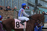 January 18, 2016: #8 Synchrony before the running of the Smarty Jones Stakes at Oaklawn Park in Hot Springs, AR. Justin Manning/ESW/CSM