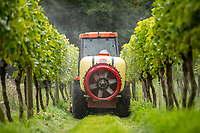 BNPS.co.uk (01202 558833)<br /> Pic: MaxWillcock/BNPS<br /> <br /> Pictured: Simon in his tractor spraying the cheese whey on his vines.<br /> <br /> A bio-dynamic vineyard has found a way to use the perfect pairing of cheese and wine to protect its grapes.<br /> <br /> Little Waddon Vineyard is trialling using whey left over from the cheese-making process as a natural fungicide to treat downy mildew.<br /> <br /> The organic vineyard in Dorset decided to give the new method a try after a wet and dismal summer saw its vines get infected.