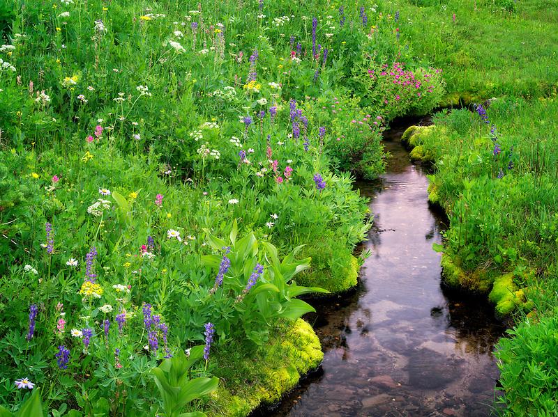 Small stream and wildflowers. Bird Creek meadows. Mt. Adams Wildernesss, Washington