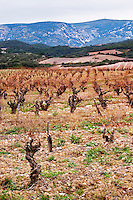 Chateau de Nouvelles. Fitou. Languedoc. Vines trained in Gobelet pruning. The vineyard. France. Europe. Mountains in the background.