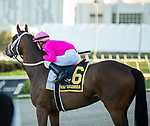February 29, 2020: #6, ZULU ALPHA returns to the turf a winner under Jockey Tyler Gaffalione and Trainer Mike Maker in the $200,000 Grade II Mac Diarmida Stakes at Gulfstream Park on February 29, 2020 in Hallandale Beach, FL. (Photo by Carson Dennis/Eclipse Sportswire/CSM)