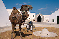 Kamel beim Dreschen, Töpfermuseum, Guellala, Djerba, Tunesien