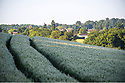 16/06/19 - SAINT ELOI - AIN - FRANCE - Paysage agricole dans la Plaine de l Ain - Photo Jerome CHABANNE