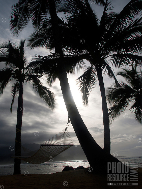 A hammock tied between two palm trees near the ocean at the St. Regis Princeville Resort in Kaua'i.