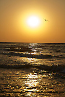 SEA_LOCATION_80181