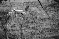 Image Ref: CA827<br /> Location: Dunkeld<br /> Date of Shot: 06.08.19