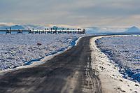 Trans Alaska oil pipeline, slope mountain, Brooks Range, Alaska