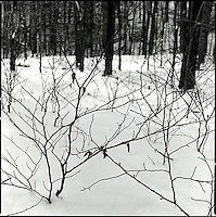 Branches in the snow<br />