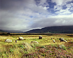 Stone Circle  Standing Stones, Machrie Moor Nr Blackwaterfoot Isle of Arran North Ayrshire Scotland. Celtic Britain published by Orion. Stone circle.