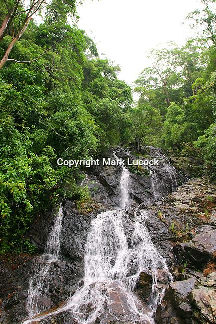 Newell Falls, Dorrigo National Park, NSW