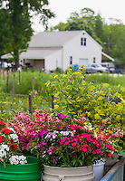 The Gardener's Workshop - Local Flowers
