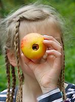 Apfel, Apfelernte, Apfeltrockner