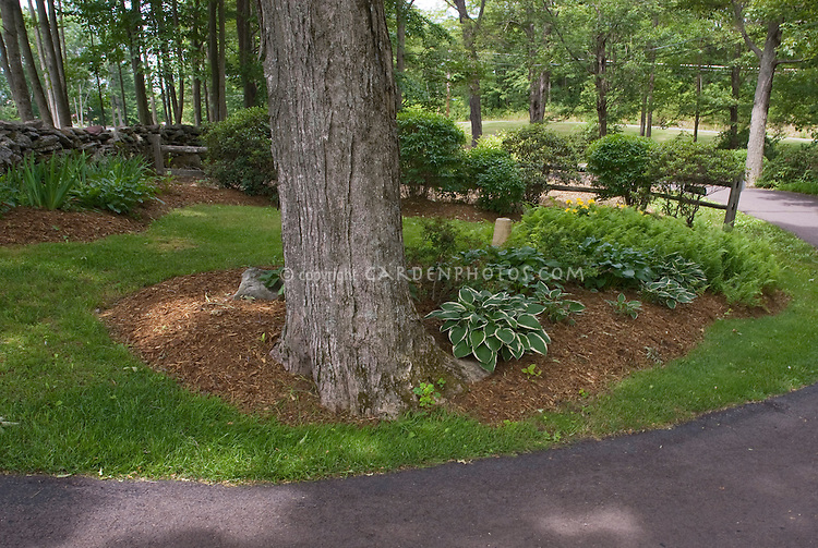 Hostas and plants under a high branched tree