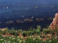 Felswatt vor westlicher Steilküste, Helgoland Insel Helgoland, Schleswig-Holstein, Deutschland, Europa<br /> rocky tidal flats at western cliff coast, Helgoland island, district Pinneberg, Schleswig-Holstein, Germany, Europe