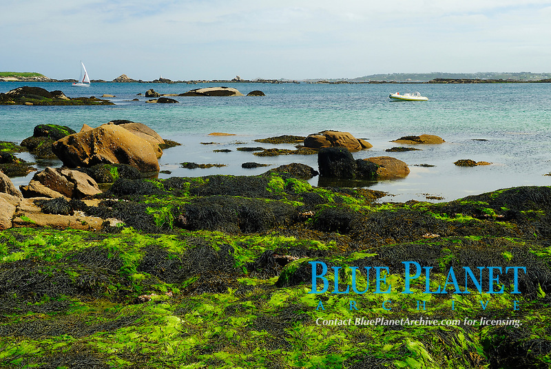Granitic beach covered with lesser grass-kelp, Blidingia minima, at low tide and inflatatble boats anchored in a cove in the Bay of Morlaix, Atlantic Ocean, North of Brittany, North of France, Europe