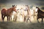 Western horses - mustangs of Oregon