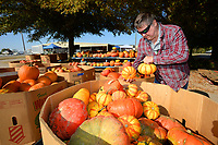 Rick McKee of Bella Vista, a member of the board of directors for Bo's Blessings, sets out pumpkins Wednesday, Oct. 14, 2020, as he and other vendors prepare the charitable organization's annual Pumpkin Festival booth for the Ozark Regional Arts and Crafts Show set for 9 a.m. to 6 p.m. today through Saturday. at the Washington County Fairgrounds in Fayetteville. Bo's Blessings sells pumpkins for $3 to $5 with all proceeds benefitting veterans. Visit nwaonline.com/201015Daily/ for today's photo gallery. <br /> (NWA Democrat-Gazette/Andy Shupe)