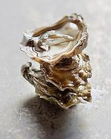 Europe/France/Aquitaine/33/Gironde/Bassin d'Arcachon: Huîtres d' Arcachon . Cap-Ferret - Stylisme : Valérie LHOMME //  France, Gironde, Arcachon,  Arcachon, Cap Ferret oysters