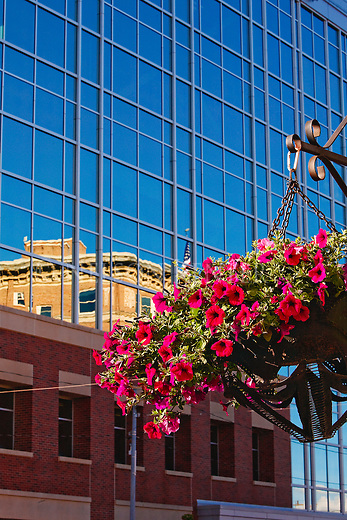 Flower basket and building reflections in the new bank building downtown Missoula, Montana