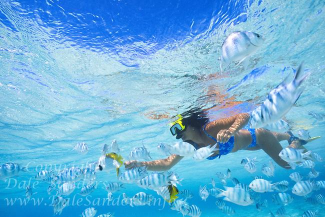 Female snorkeler and Sargeant major fish,Aitutaki Lagoon. Model Released.