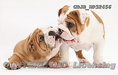 Kim, ANIMALS, fondless, photos, GBJBWP32456,#A# Tiere ohne Fond, animales sind fondo