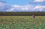 Three generations walk in Tulips, Willamette Valley, Oregon