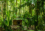 SLR camera trap in tropical rainforest, Kibale National Park, Uganda