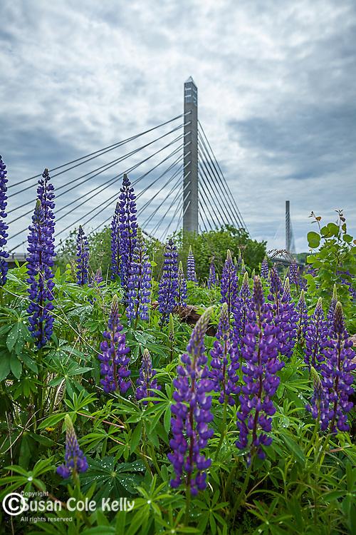 The Penobscot Narrows Bridge and Observatory on the Penobscot River, Bucksport, Mid-coast, ME