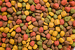 Close-up of dog food